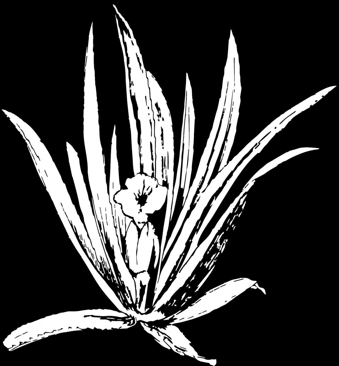 Oude nummers Stratiotes en rapporten over moeras(bos)vegetaties