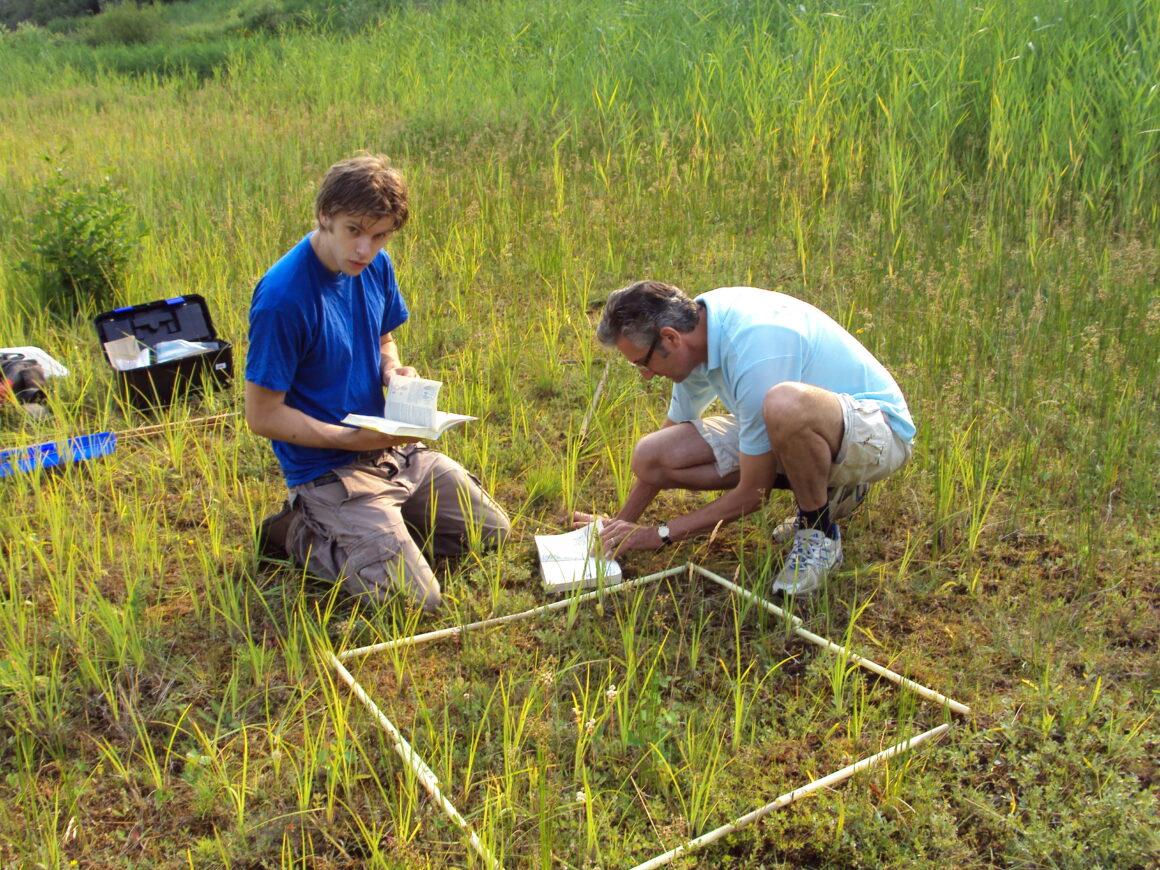 Deelnemen aan onderzoek naar de nutriënten-beschikbaarheid van kruidachtige vegetaties