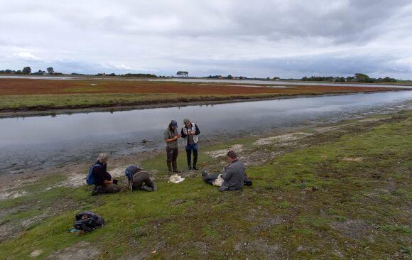PKN-excursie brakwatermoerassen aan de zuidzijde van Schouwen-Duiveland
